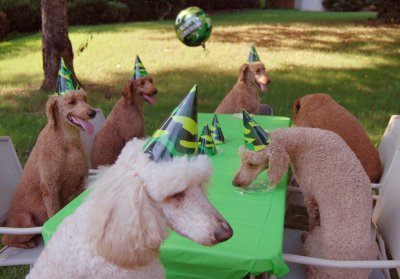 Louter creek red hunting poodles go to salty dog to send this poodle birthday party card bookmarktalkfo Gallery