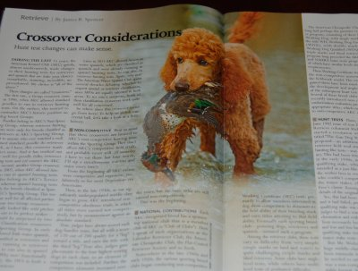 An article in the December 2011 issue of Gun Dog Magazine featuring our dogs.