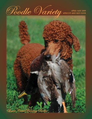 Making the cover of Poodle Variety magazine.